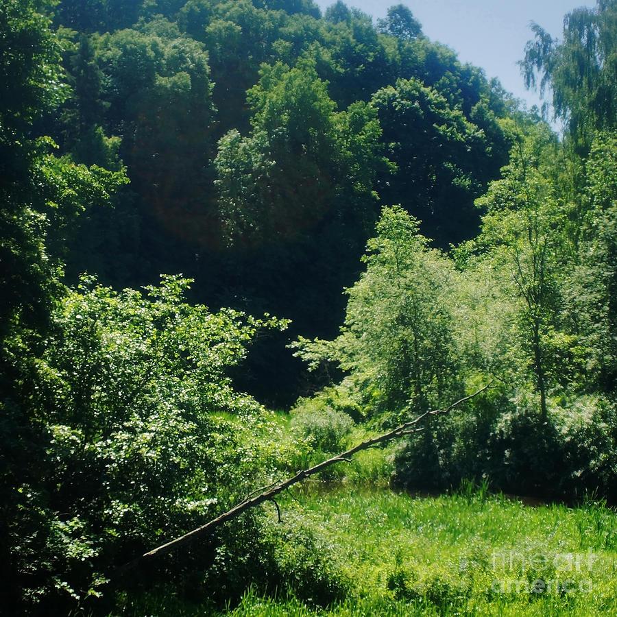 miško hektaro kaina