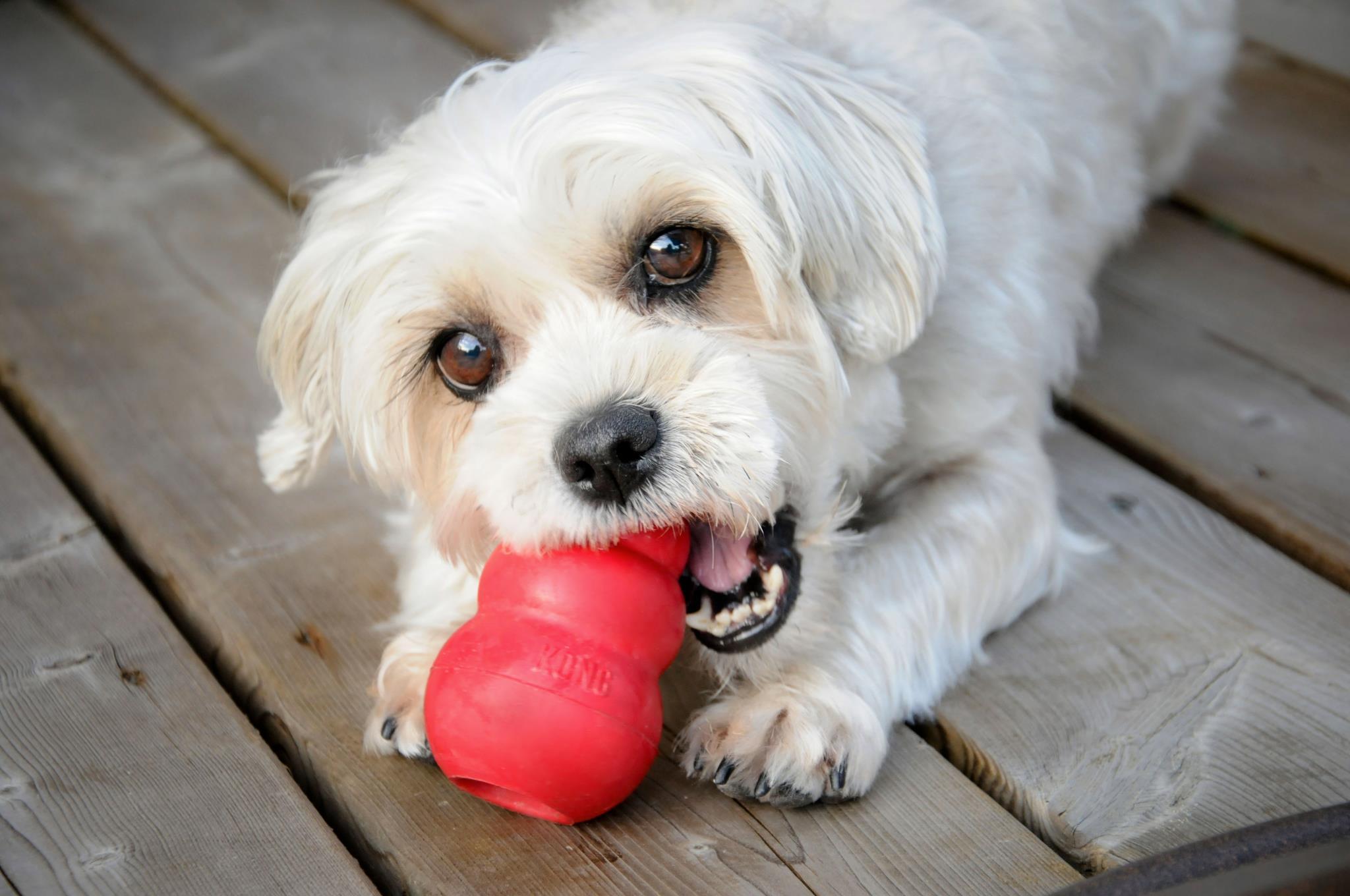 žaislai šunims